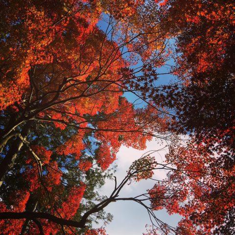 駆け込み紅葉狩りに行ってきました。