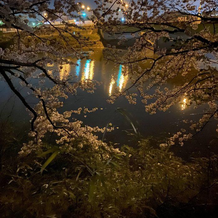 2021年の桜。